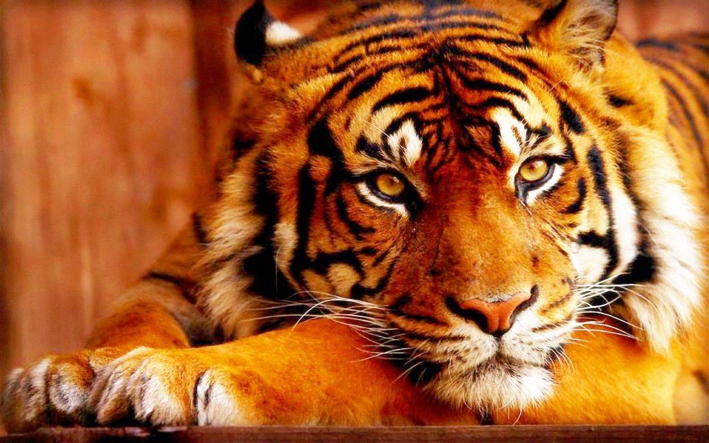 华东区块虎系统开发